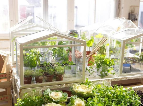 Полезное осенне-зимнее занятие для увлеченного дачника в собственной квартире