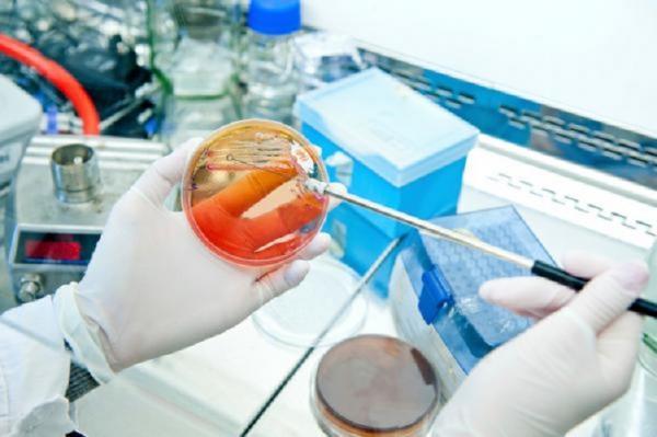 Какие возможности открывает генетика для современных промышленных биотехнологий