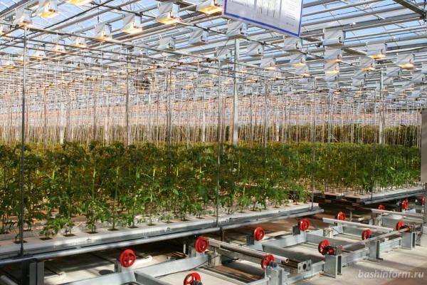Инновационные агротехнологии привносят свои требования к характеристикам сортов