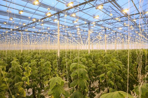 Об использовании «зеленых технологий» в тепличном хозяйстве