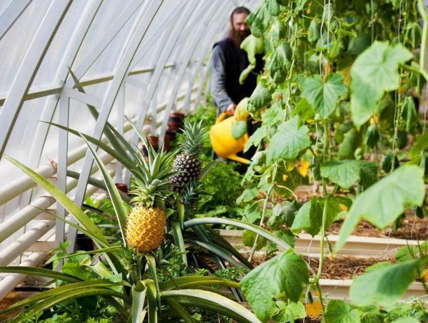 Кому в наших краях окажется по силам выращивание тропических фруктов