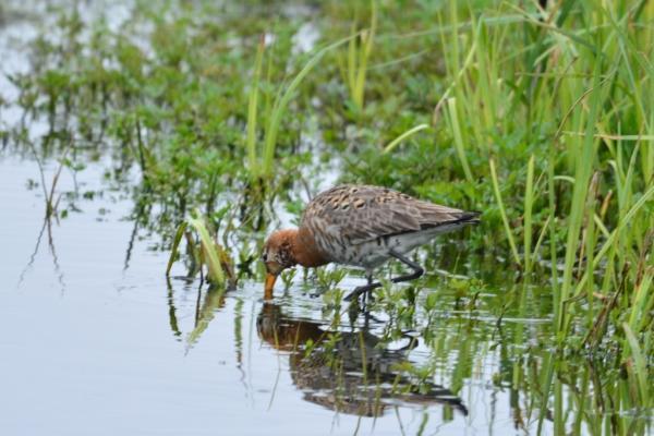 В Красную книгу Новосибирской области войдут новые сведения о редких видах