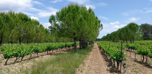 Агролесоводство как земледелие будущего