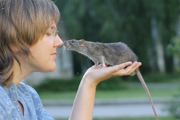 Сибирские ученые исследовали влияние окситоцина на крыс и обнаружили, что он может как успокаивать животных, так и провоцировать агрессивное поведение