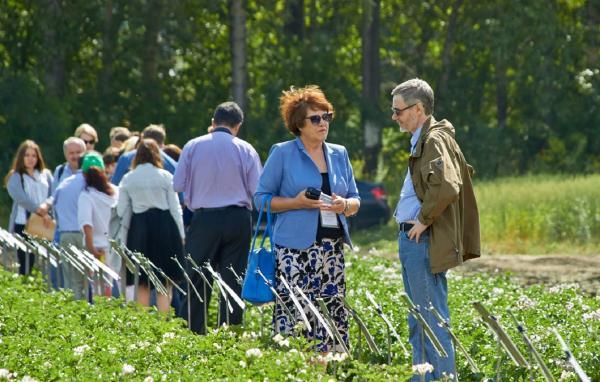 Непростые погодные условия в Новосибирской области помогли выявить самые надежные сорта картофеля