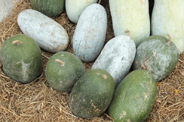 ИЦиГ совместно с Ботаническим садом будут внедрять новые для россиян овощные культуры