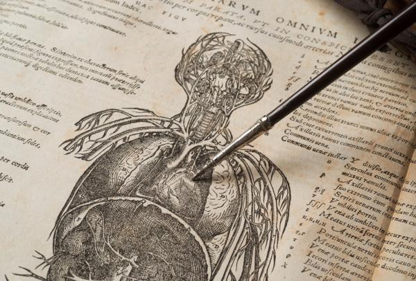 Уильям Гарвей – человек, объяснивший, как на самом деле работает сердце