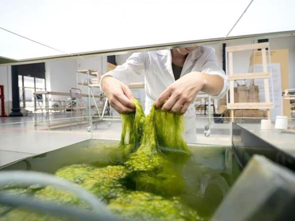 Американские экологи засомневались в «зеленом» характере этого натурального материала