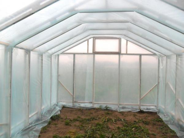 Профессионалы делятся советами по выращиванию в закрытом грунте экологически чистой продукции