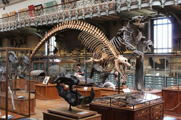 Об ошибочных реконструкциях вымерших животных