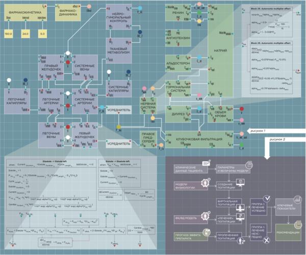 В Институте вычислительных технологий СО РАН созданы первые модели виртуального организма для медицинских исследований