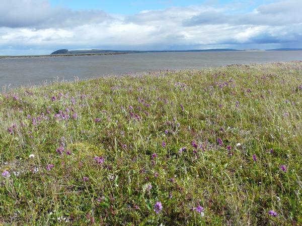 Что исследовали новосибирские почвоведы и ботаники в Заполярье
