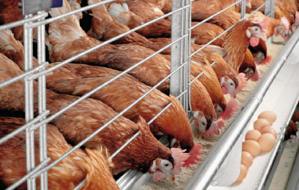 Для жителей Новосибирска создаются «умные» фермы с дистанционной системой управления