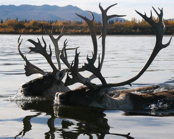 Глобальное потепление вынуждает пересмотреть наши подходы к освоению северных территорий