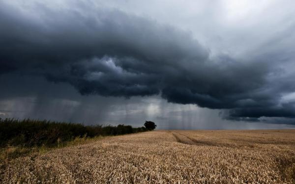 Погодные «сюрпризы» вынуждают аграриев прислушиваться к рекомендациям ученых