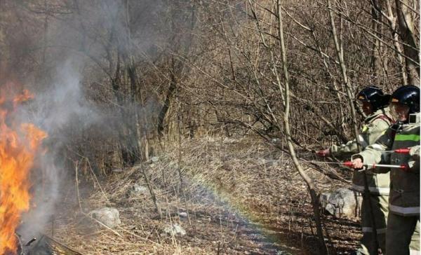 Найден способ быстрее тушить лесные пожары