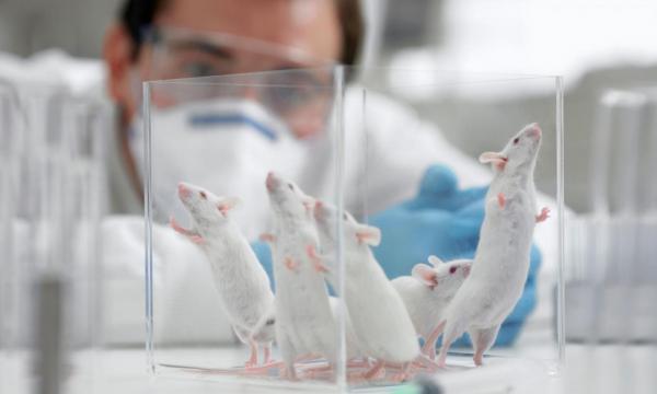 Ученые ИЦиГ попытаются скорректировать проявления аутизма у мышей