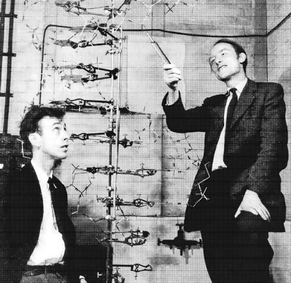 Весной 1953 года Фрэнсис Крик, Джеймс Уотсон и Морис Уилкинс расшифровали структуру молекулы ДНК