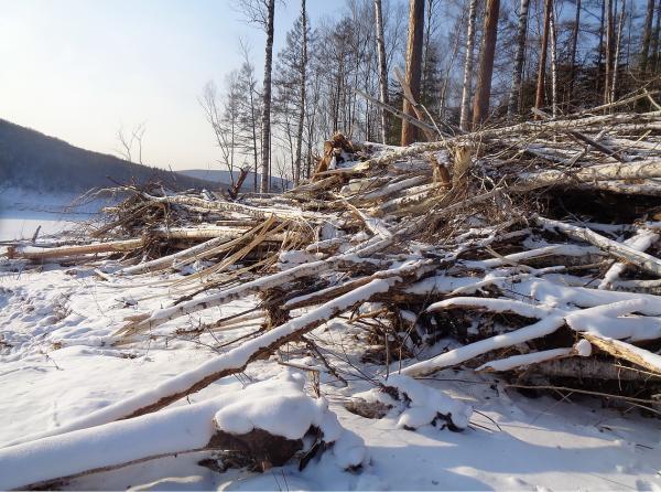 Ученые Сибирского и Дальневосточного отделения РАН провели обследование оползня, перекрывшего русло реки Буреи
