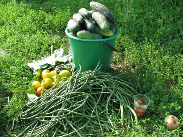 Сибирские ученые предлагают расширить ассортимент овощных культур для функционального питания