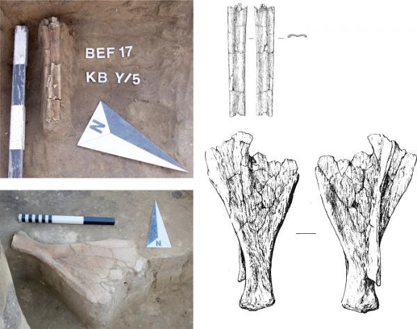 Археологи выделили на юге Западной Сибири новую культуру эпохи неолита