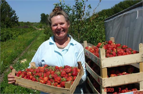 КФХ «Сады Шубиной» как пример органического земледелия в пригородных условиях