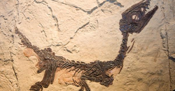 Как выглядел реальный мир динозавров с позиций современной науки