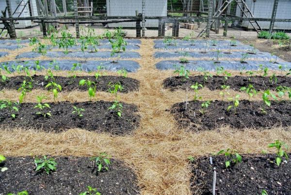 Как сделать почву плодородной без химии и постоянной перекопки