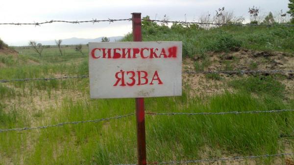 Сибирская язва - мор прошлого или основа для пандемий будущего?