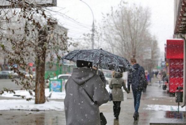 Что думают специалисты-растениеводы об аномально холодной новосибирской весне 2018 года