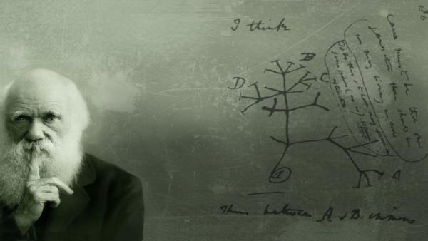 Надо ли превращать знаменитого ученого в кумира?
