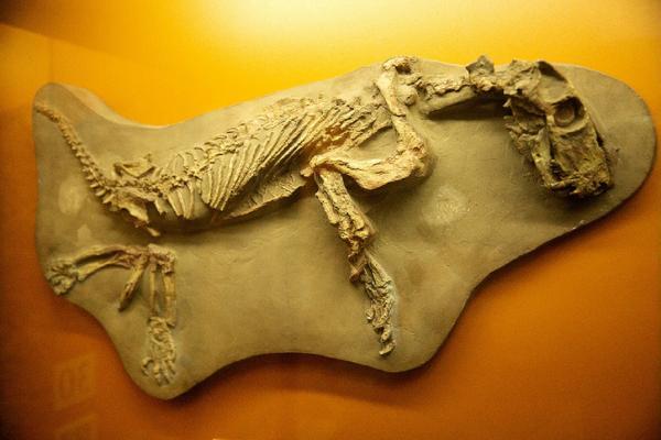 Репортаж с палеонтологических раскопок пермских звероящеров