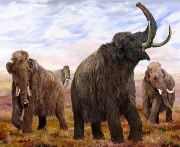 Палеонтолог Евгений Мащенко — о мамонтах и перспективах их воссоздания