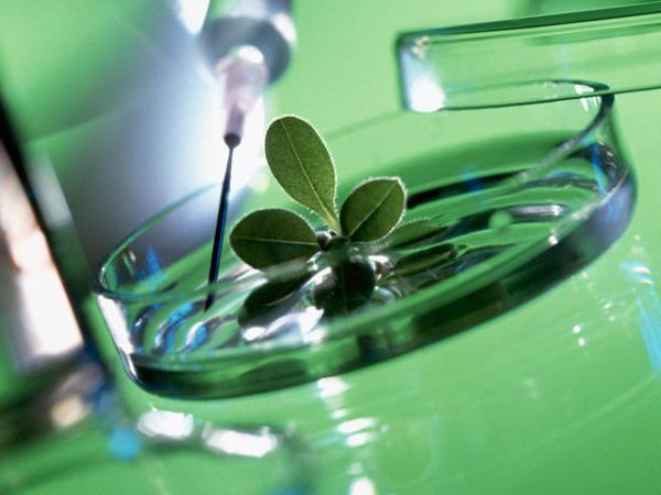 Академик Шумный: «В условиях реформы науки возрастает роль таких организаций, как ВОГиС»