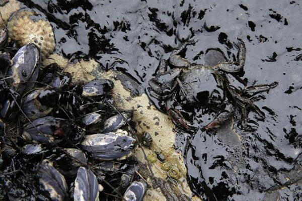 Ученые нашли на Крайнем Севере бактерии, способные очищать загрязненные нефтью территории