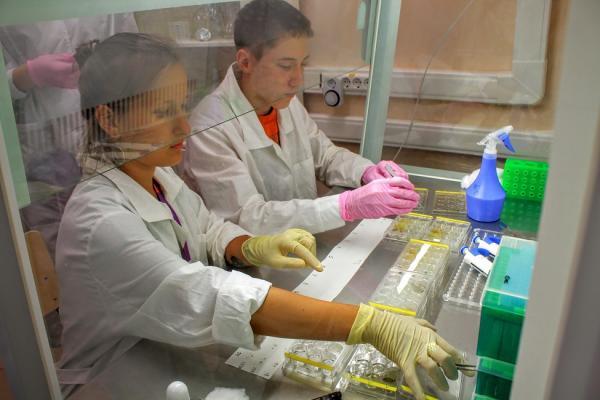 Ученые Академгородка разрабатывают биостимулятор роста растений