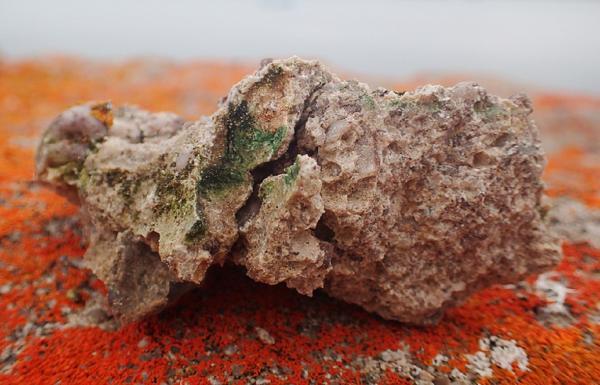 """Ученые обнаружили самую северную """"жизнь в камне"""" российской Арктики"""
