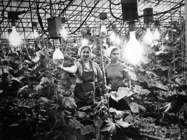 Больше века назад в России зародилось околополярное растениеводство
