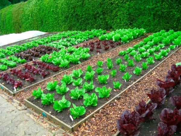 Новые высоты для органического земледелия