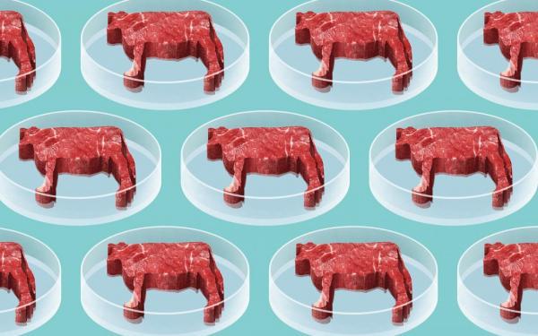 На западных рынках появляются искусственно выращенные мясо и курятина