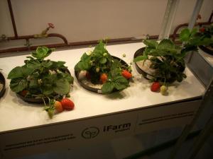 Вкус ягод, салата и базилика совершенно натуральный, без всякого намека на «пластик»