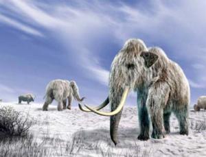 Ледниковые периоды в Сибири