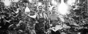 Почти век назад в России зародилось околополярное растениеводство