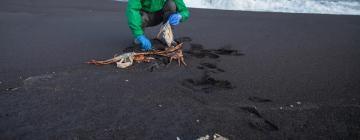Ученые до сих пор спорят о том, кто виновник экологического бедствия на Камчатке