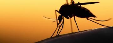 В США провели испытания генетических способов борьбы с распространителями смертельных вирусов