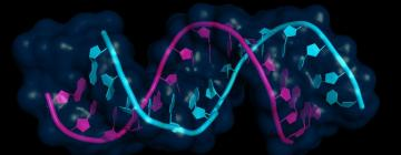 Как миРНК-направленные препараты могут остановить рак