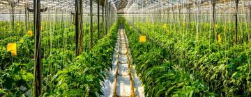 Сити-фермерство как интегральный проект для Новосибирска
