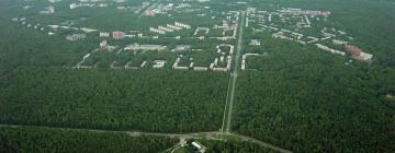 Лесные «островки» Новосибирского Академгородка нуждаются в профессиональном уходе, считают ученые-биологи