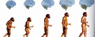 Специалисты ИЦиГ СО РАН рассказали о параллелях между доместикацией животных и эволюцией человека