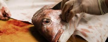 В Новосибирске придумали уникальную инновационную технологию утилизации отходов рыбопереработки